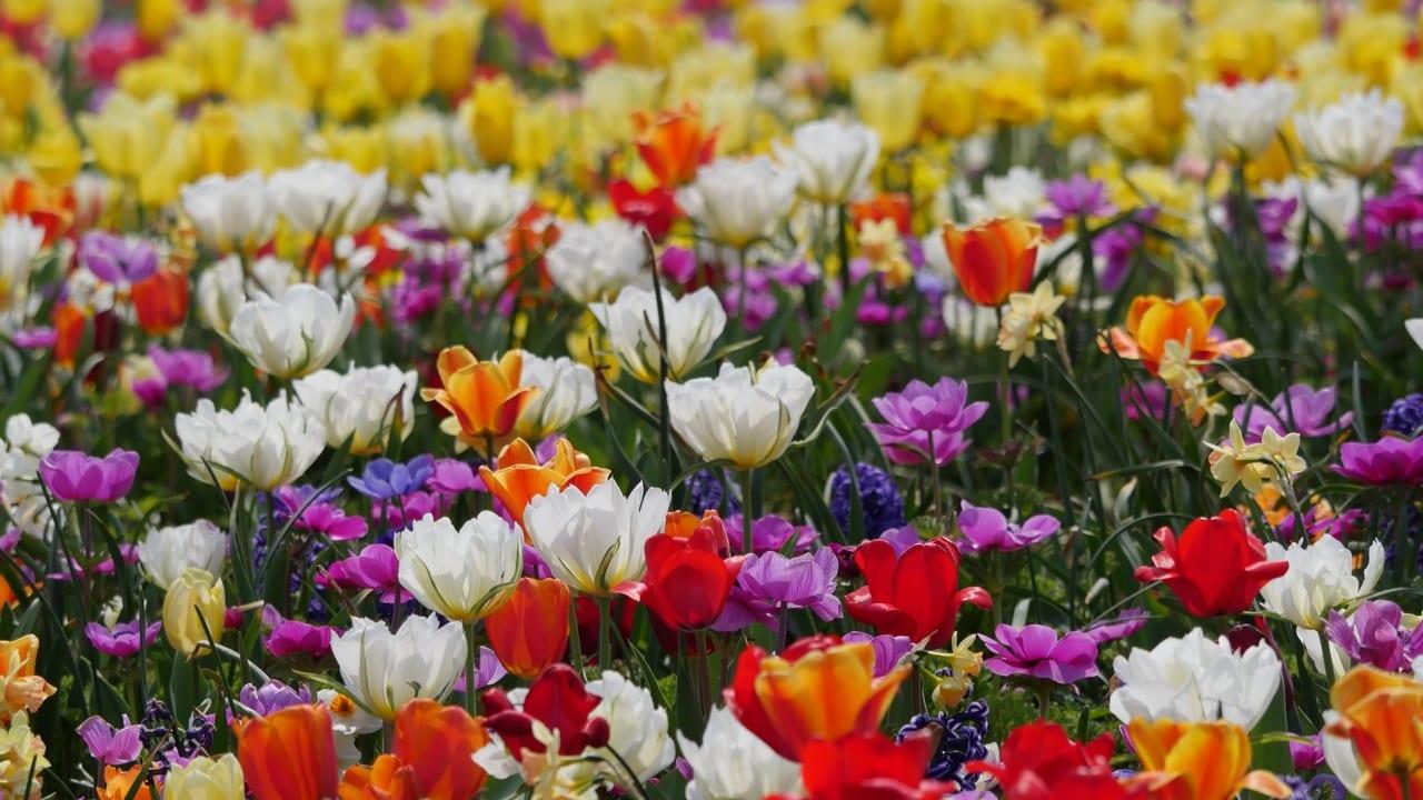 花菜ガーデンが3月24日(火)から営業を再開!