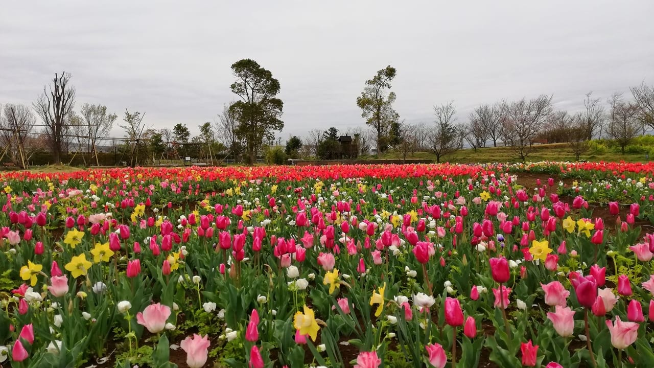 花菜ガーデンが3月30日(月)から営業再開。来園者には新型コロナウィルスの拡散防止策のお願い