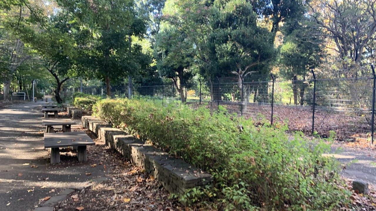 神代植物公園への道