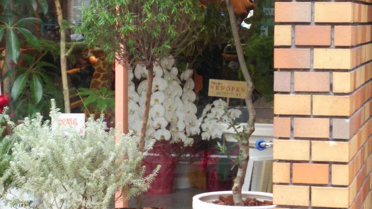 Pelo. HAIR SALON ペロ. ヘアサロン 店内の開店祝いのお花