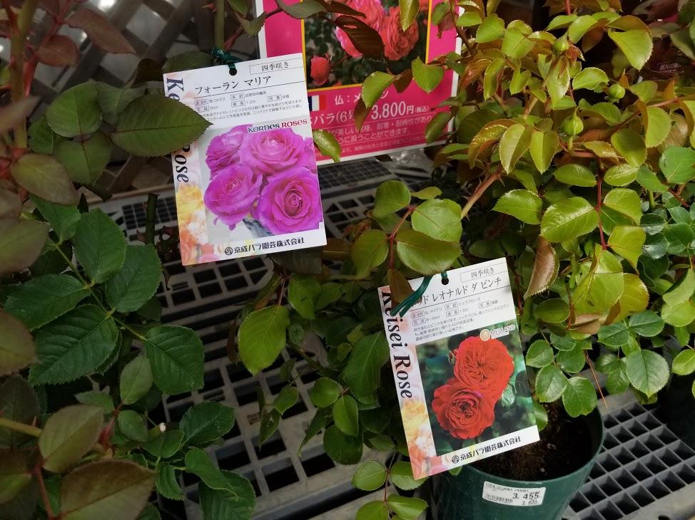 京成バラ園バラ祭り