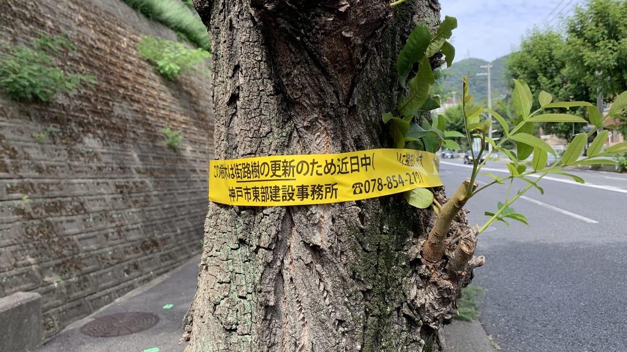 神戸市街路樹更新