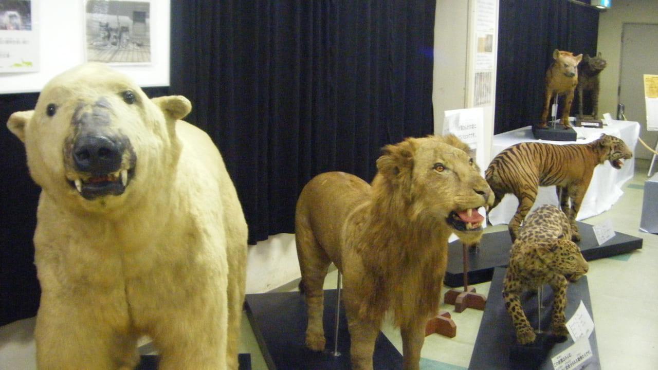 戦時中の動物園展