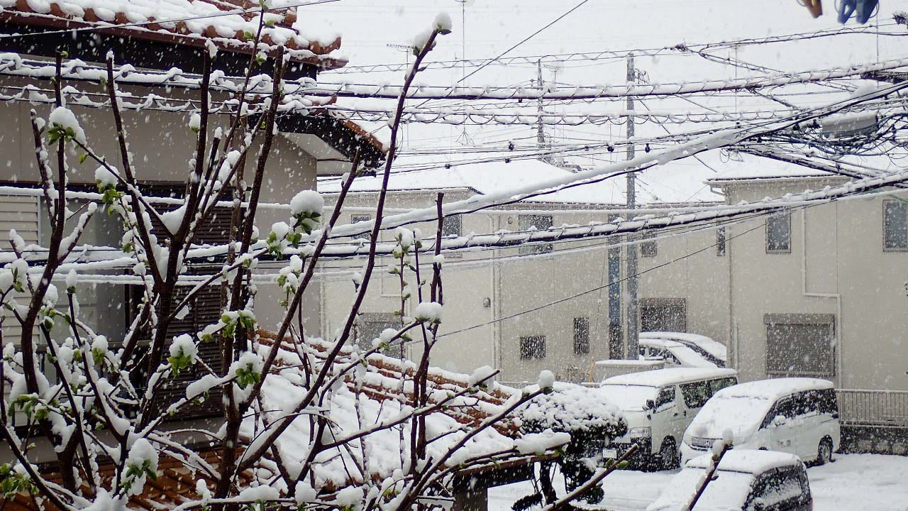2020年3月29日に降った雪