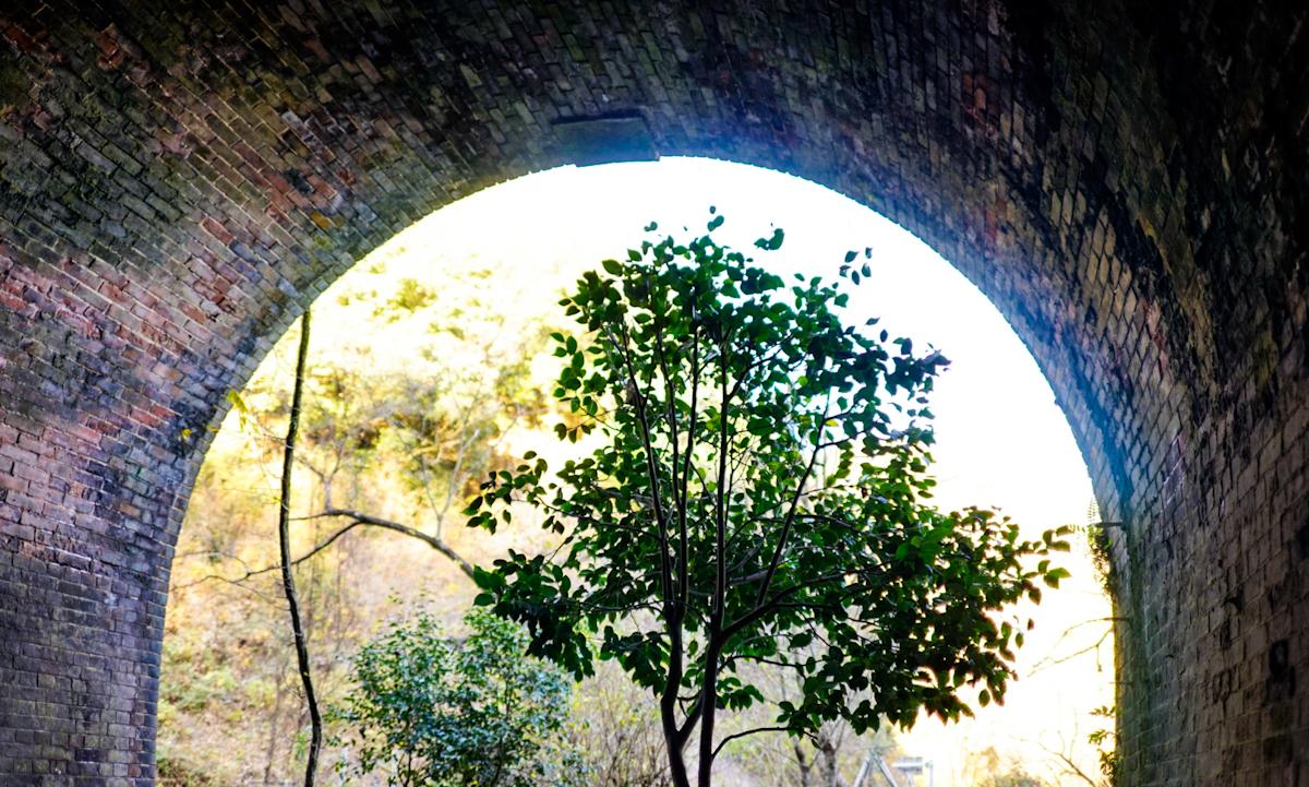 愛岐トンネルと自然